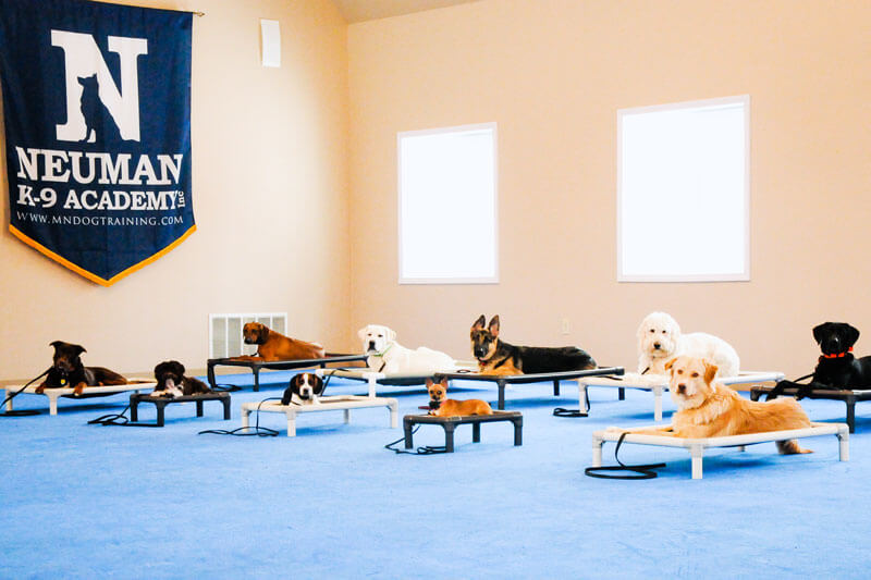 Dog Boot Camp