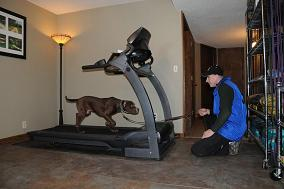 Canine Treadmill Training