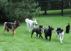 Exclusive Dog Boarding - Group Play