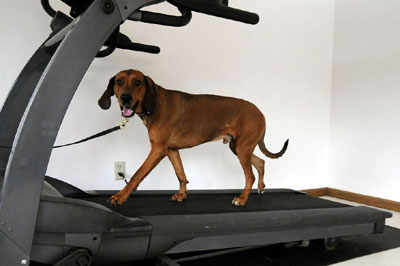 Boot Camp Dog in Training
