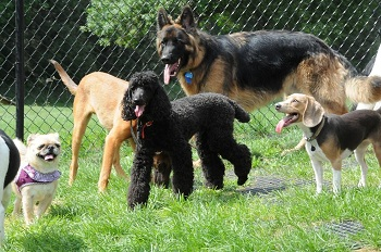 Dog Boarding Camp - Minneapolis MN