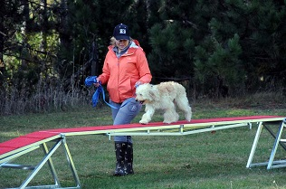 Boot Camp Dog Training - Agility and confidence