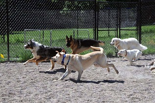 Dog Training Boot Camp - Group Socialization