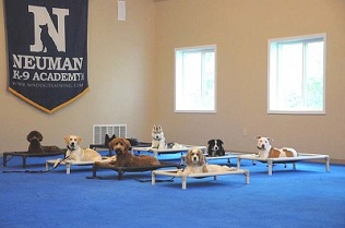 Boot Camp Dog Training - Group Obedience