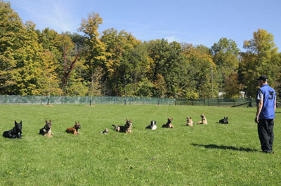 Dog Training Boot Camp