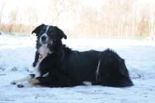Bella Obedience Level I. Dog Training