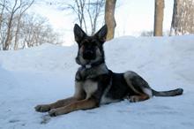 Bravo Boot Camp Dog Training