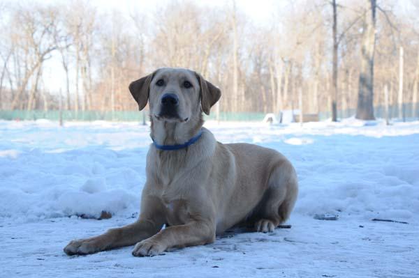 Buddy Obedience Level II. Dog Training