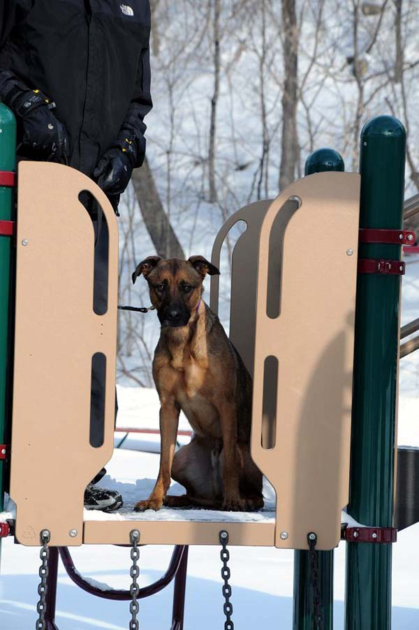Cephis - Boot Camp Dog Training