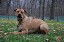 Chego Boot Camp Level II. Dog Training