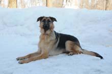 Heidi Boot Camp Level III. Dog Training