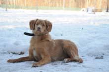 JJ Boot Camp Level II. Dog Training