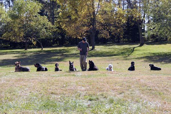 Jax (Newfoundland) - Boot Camp Dog Training