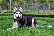 Kenai - Boot Camp Dog Training