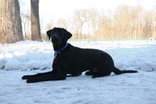 Leo Boot Camp Level I. Dog Training