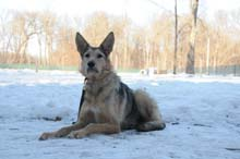 Pepper Boot Camp Level II. Dog Training