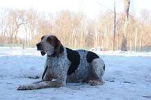 Psammy Boot Camp Level II. Dog Training