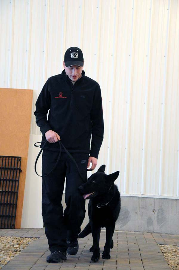 Rock (German Shepherd Dog) - Boot Camp Dog Training