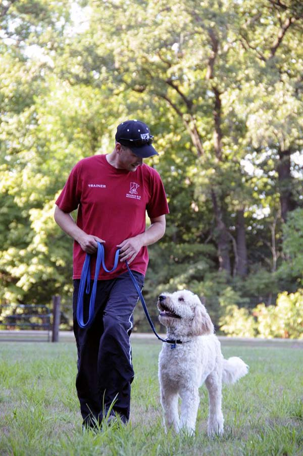 Rocky (Goldendoodle) - Dog Training Pictures
