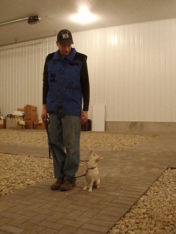 Neuman K-9 Academy Graduate Shelby - Toy Fox Terrier Training in Minnesota