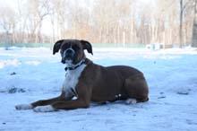 Stella Boot Camp Level I. Dog Training