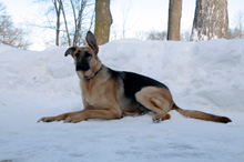 Vladimir Boot Camp Level III. Dog Training