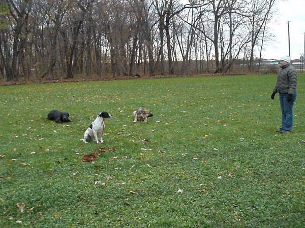 Neuman K-9 Academy Graduate Zoe - Terrier Training in Minnesota
