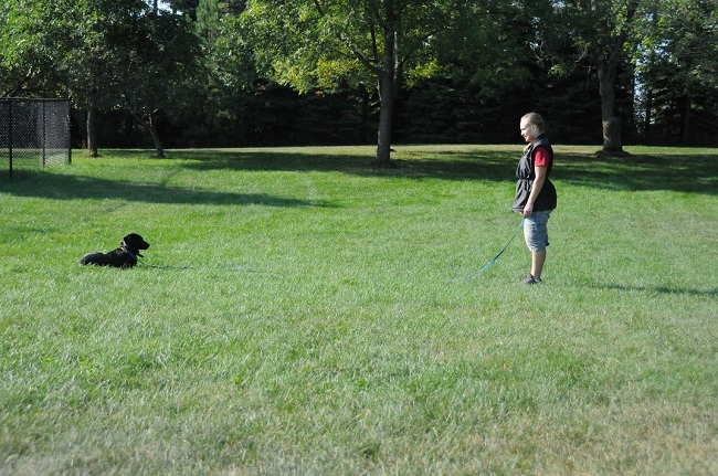 Bruce (Black Labrador) - Boot Camp Dog Training