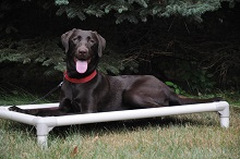 Coco (Labrador Retriever) - Boot Camp Level I. Dog Training