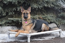Gretchen (German Shepherd) - Boot Camp Level II. Dog Training