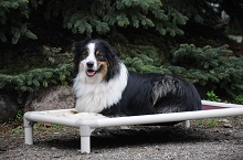 Meika (Australian Shepherd) - Boot Camp Level I. Dog Training