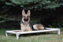 Reese (German Shepherd) - Boot Camp Level II. Dog Training