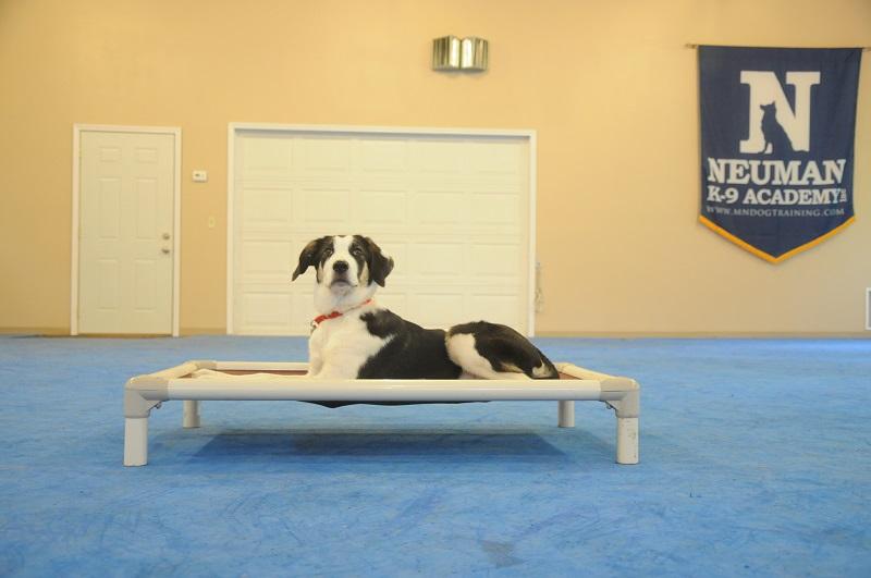 Bailey - Puppy Camp Level I. Dog Training