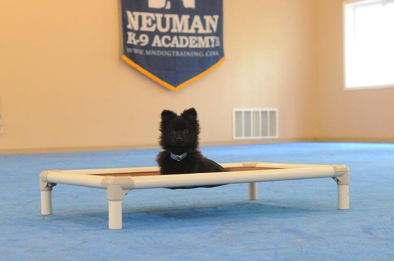 Bear (Pomeranian) - Puppy Camp Level I. Dog Training