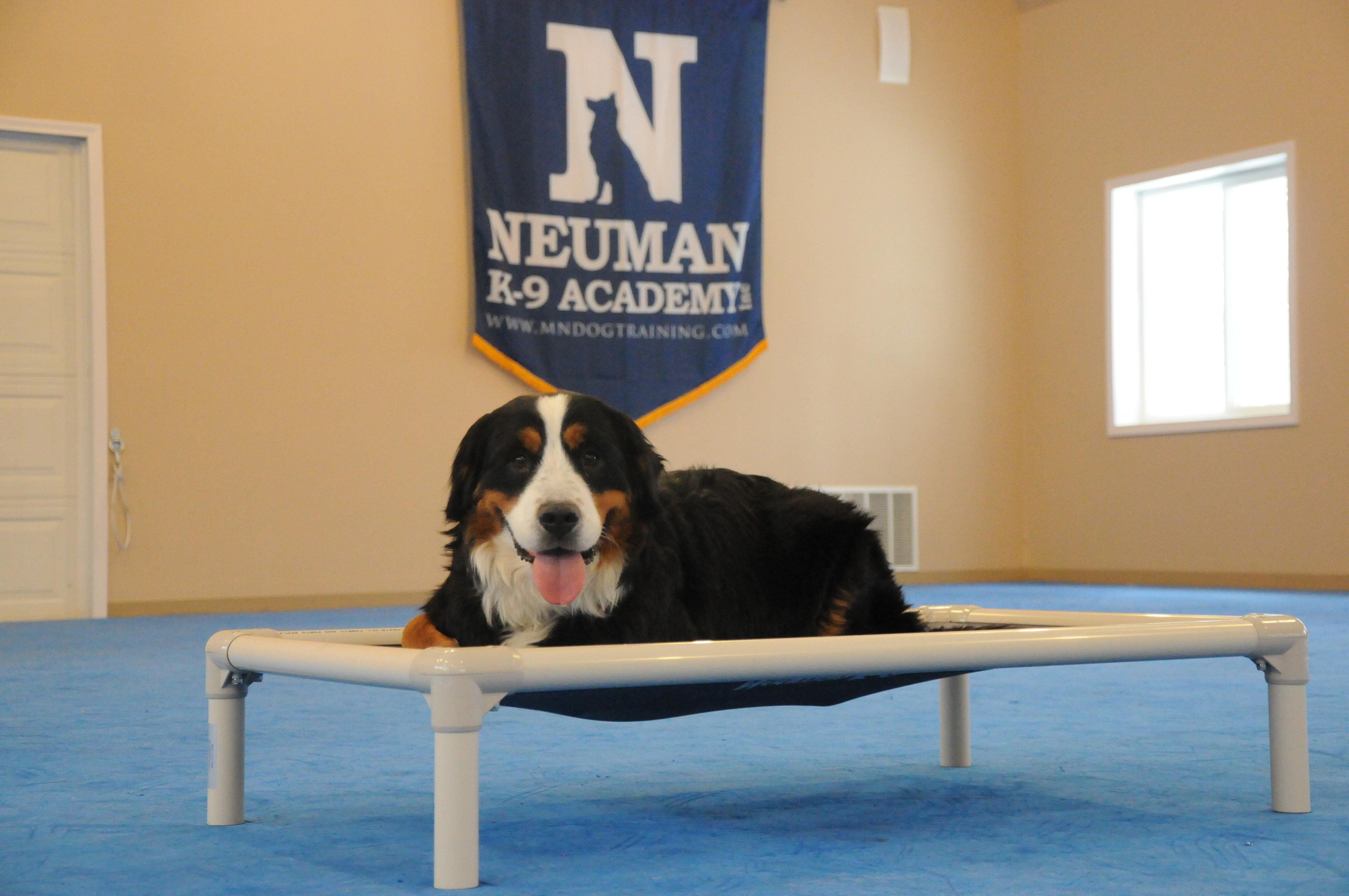 Bella (Bernese Mountain Dog) - Boot Camp Level I. Dog Training