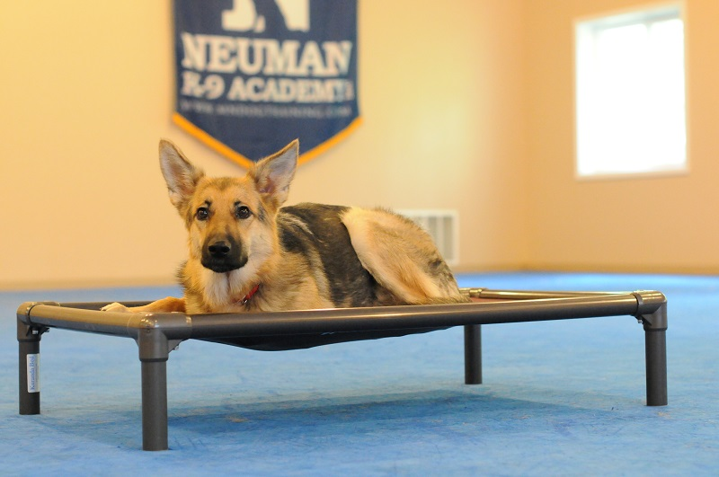 Bella (German Shepherd) - Boot Camp Dog Training