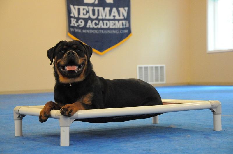 Bentley (Rottweiler) - Boot Camp Dog Training