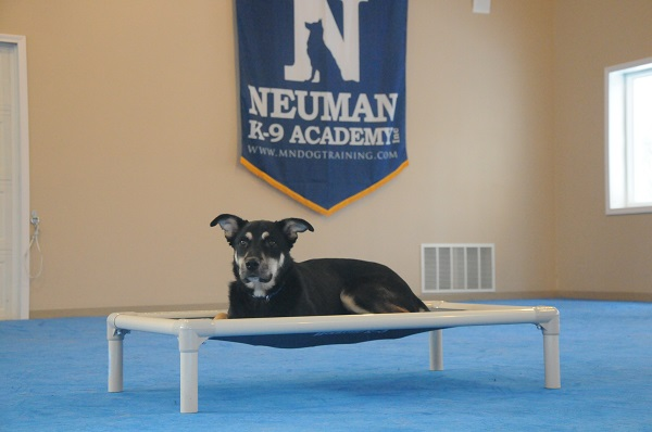 Beowolf - Boot Camp Level II. Dog Training