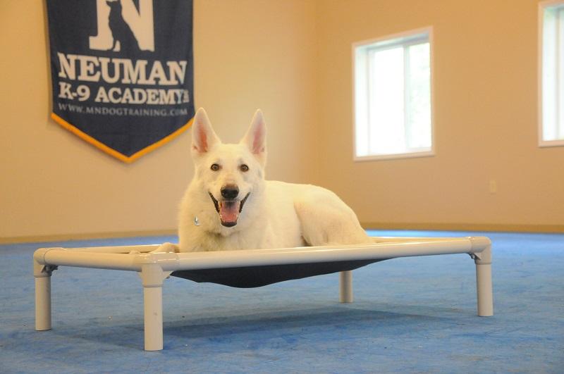 Biggie (White German Shepherd) - Boot Camp Dog Training
