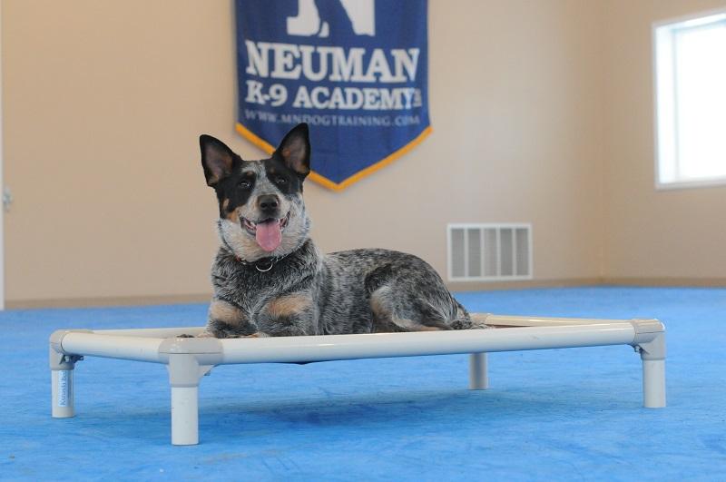 Blu - Boot Camp Level I. Dog Training