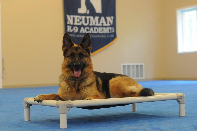 Brandi - Boot Camp Level II. Dog Training
