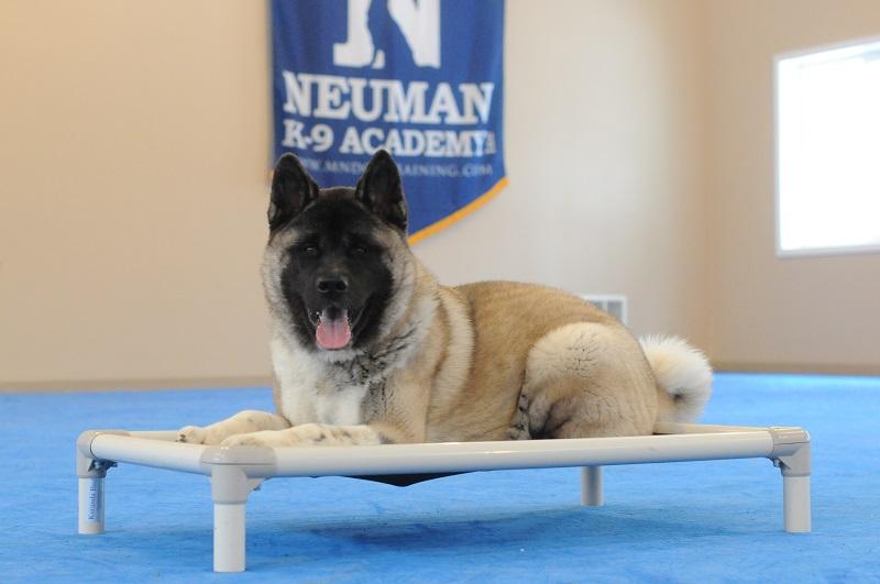 Captain - Boot Camp Level II. Dog Training