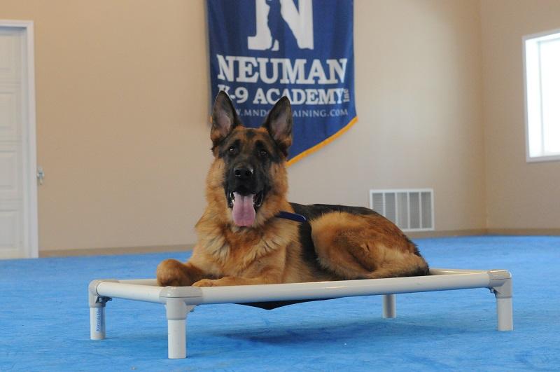 Cooper - Boot Camp Level II. Dog Training