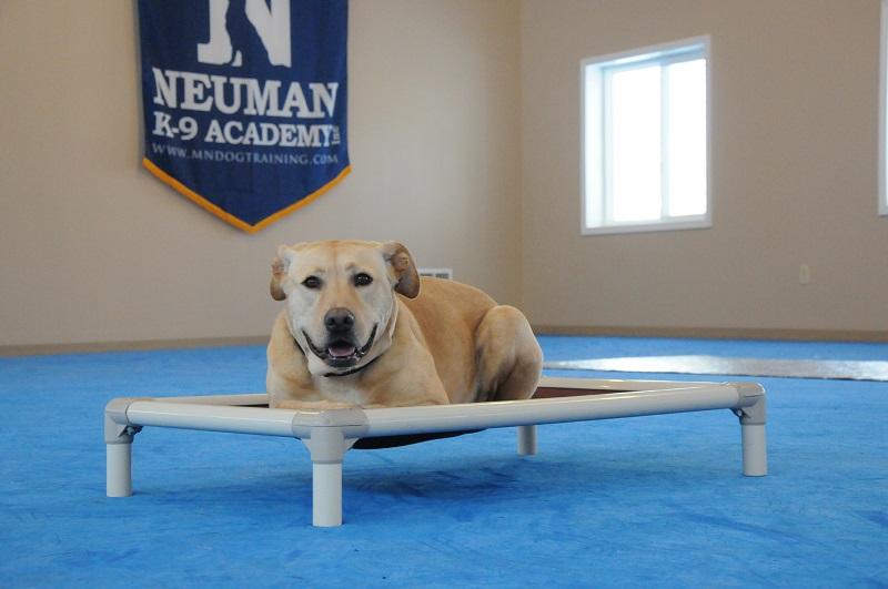 Cosmo (Labrador Retriever) - Boot Camp Level II. Dog Training