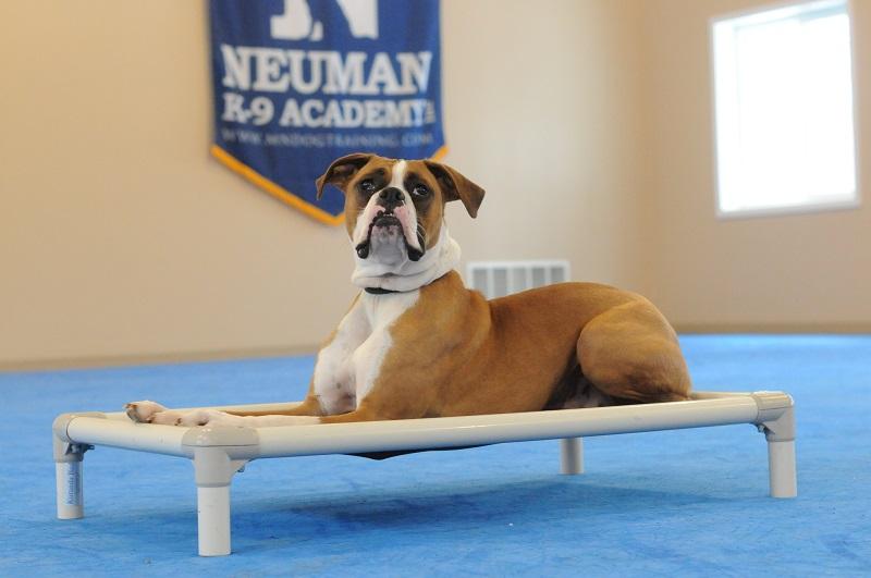 Dawg - Boot Camp Level II. Dog Training