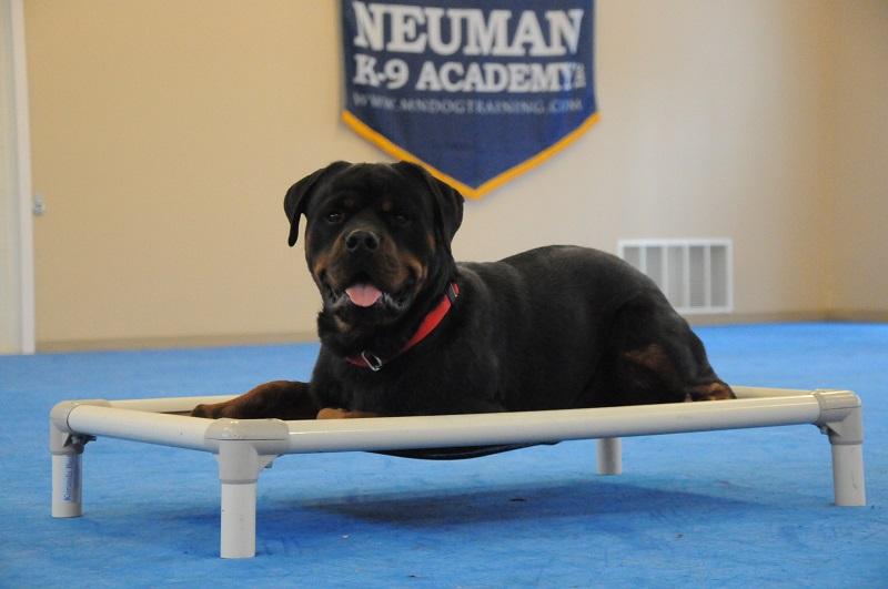 Dozer (Rottweiler) - Boot Camp Dog Training