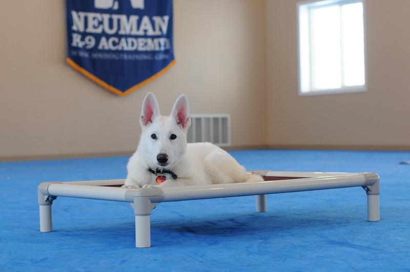Duke (White German Shepherd) - Puppy Camp Level II. Dog Training