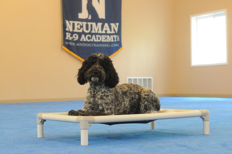 Edy (Portugese Water dog) - Boot Camp Level II. Dog Training