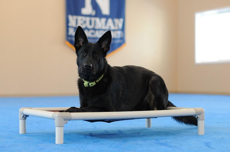 Elga (German Shepherd Dog) - Boot Camp Level I. Dog Training