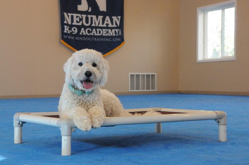 Elsa (Goldendoodle) - Boot Camp Dog Training